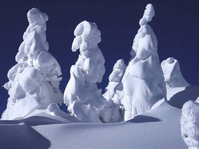 """Snow Monsters"" of Japan (25 pics)"