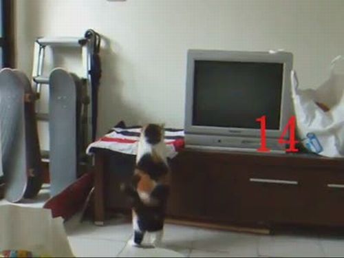 This Cat Can't Jump