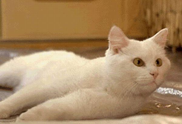 Cat GIFs (14 gifs)