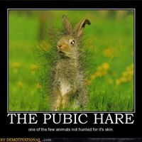 Funny Demotivational Posters (89 pics)