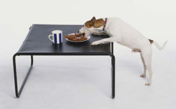 Animals Stealing Food (21 pics)