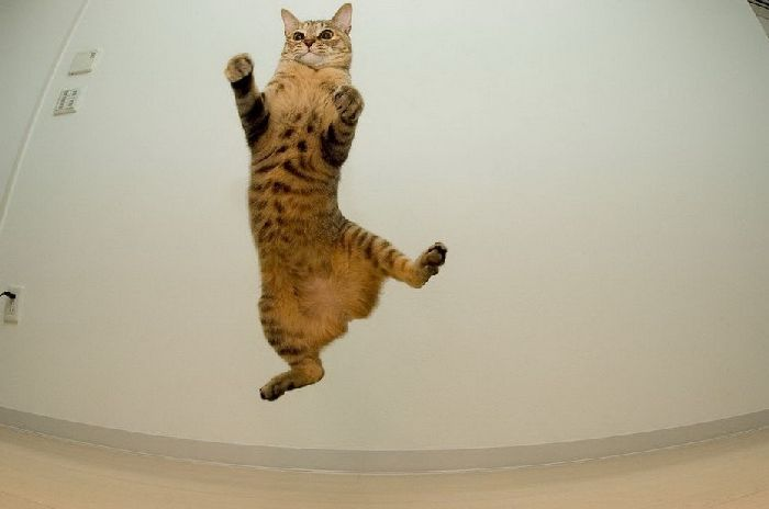 Flying Cats (37 pics)