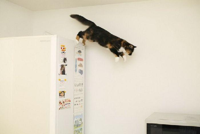 Flying Cats (37 pics)
