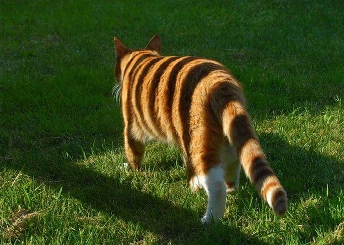 Cats (136 pics)