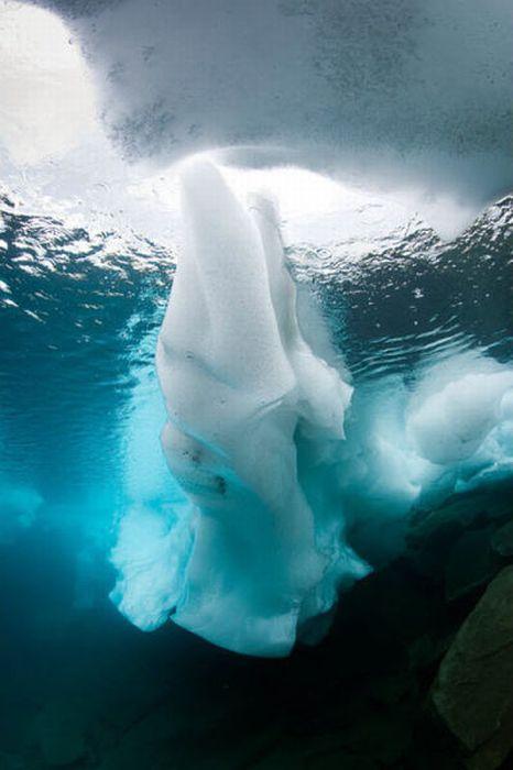 Ice Diving (15 pics)