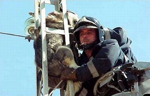 Dog Rescue Operation (6 pics)