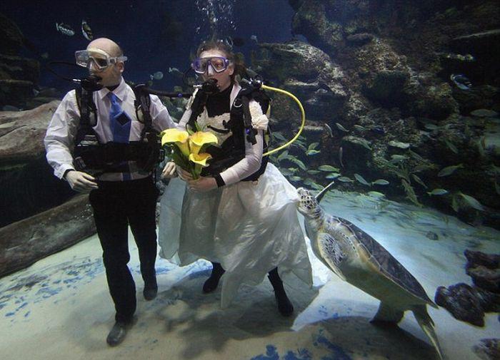 Underwater Wedding (6 pics)
