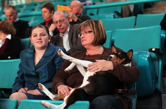 Backstage At The 135th Annual Westminster Dog Show (30 pics)
