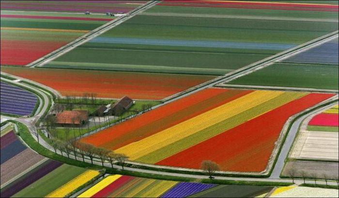Beautiful Tulip Fields (32 pics)