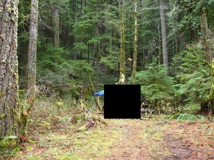 Be Careful When You Go Camping in the Woods (5 pics)