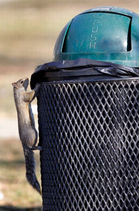 Squirrel Raids Park Trash Can (7 pics)