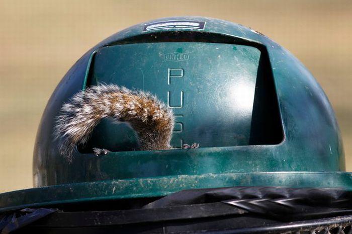 Squirrel Raids Park Trash Can (7 pics)