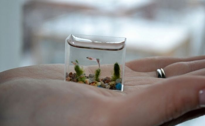 World's Smallest Aquarium (6 pics)