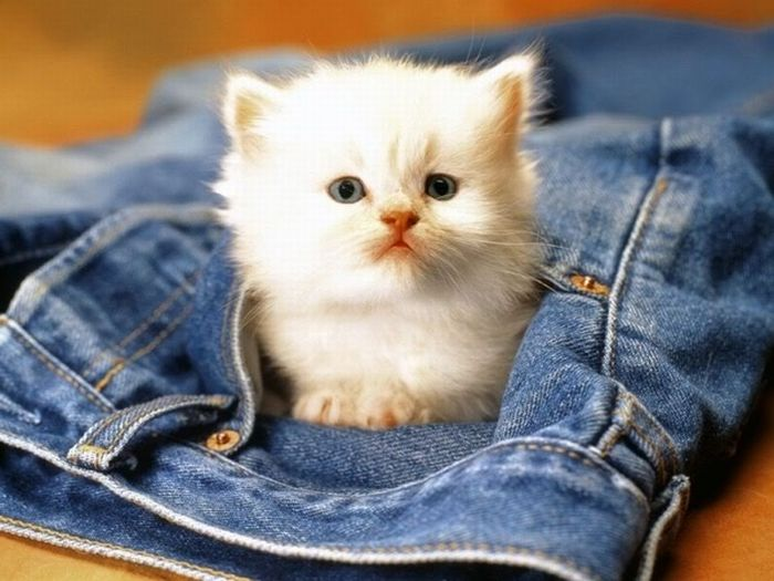 Kittens in Pockets (22 pics)