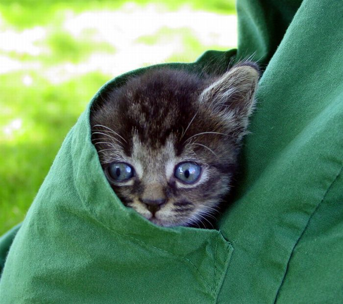 Kittens in Pockets (22 pics)