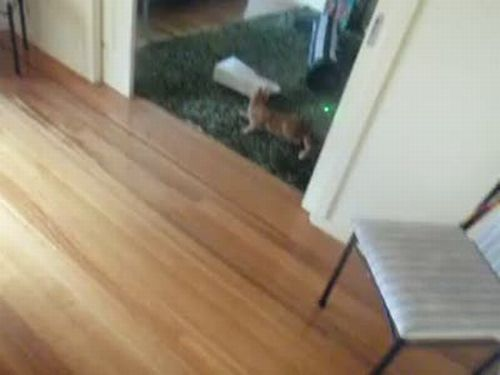 Laser Bowling Cat