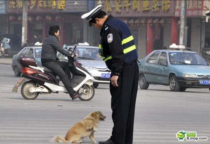 Policeman and Dog (6 pics)