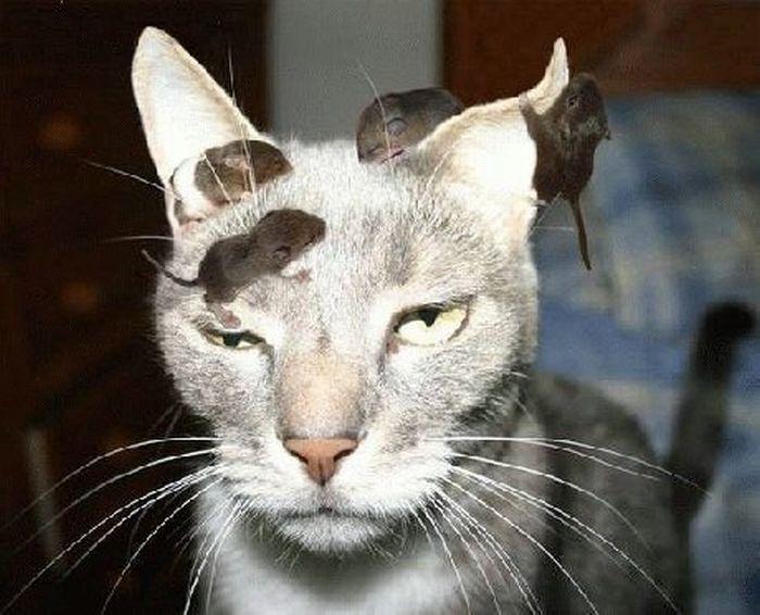 Resultado de imagen para imagenes de gatos enojados