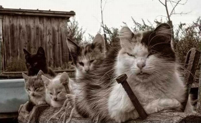 Angry Cats (17 pics)