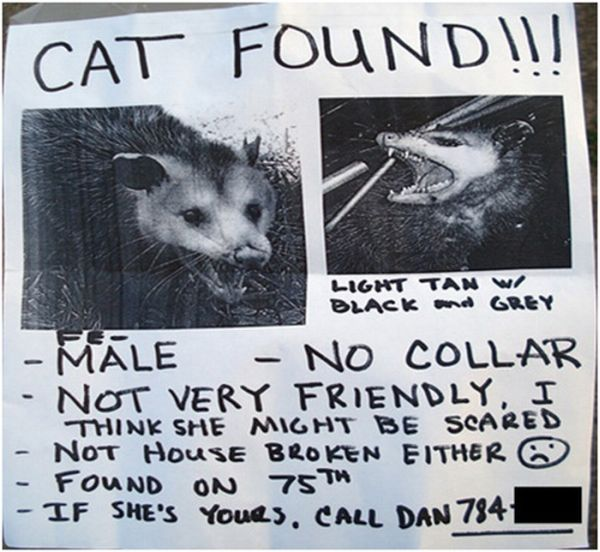 Funniest Lost & Found Pet Signs (12 pics)