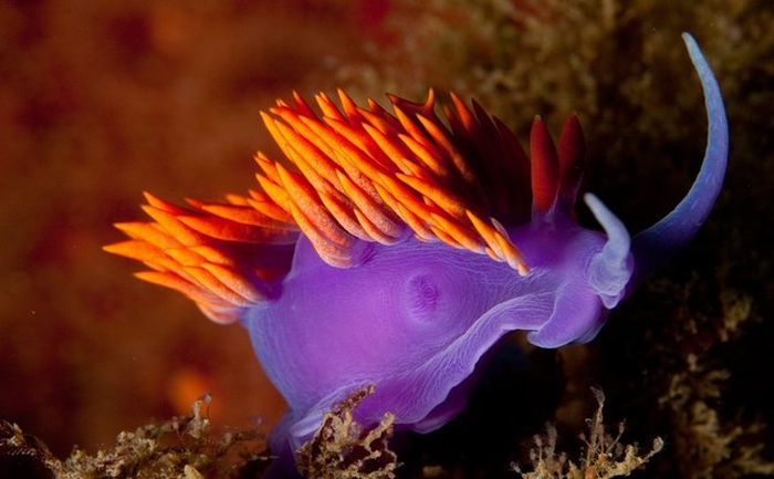 Beautiful Sea Creatures (38 pics)