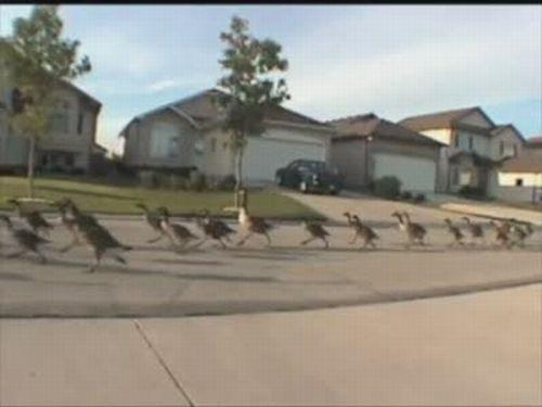 Goose Marathon