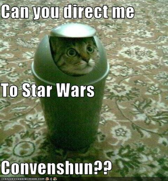 May The 4th Be With You Funny Meme: Star Wars Cats (28 Pics