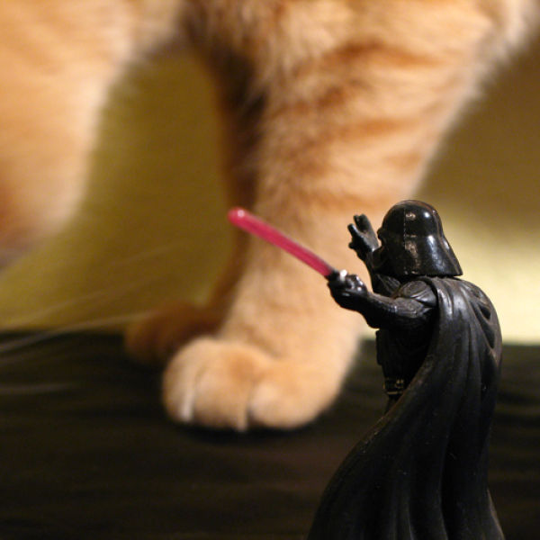 Star Wars Cats (28 pics)