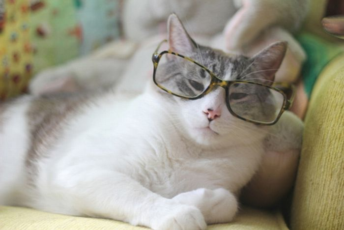 Cats Wearing Glasses (25 pics)