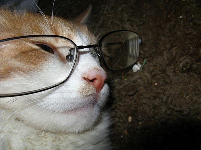 Cats Wearing Glasses (25 pics)