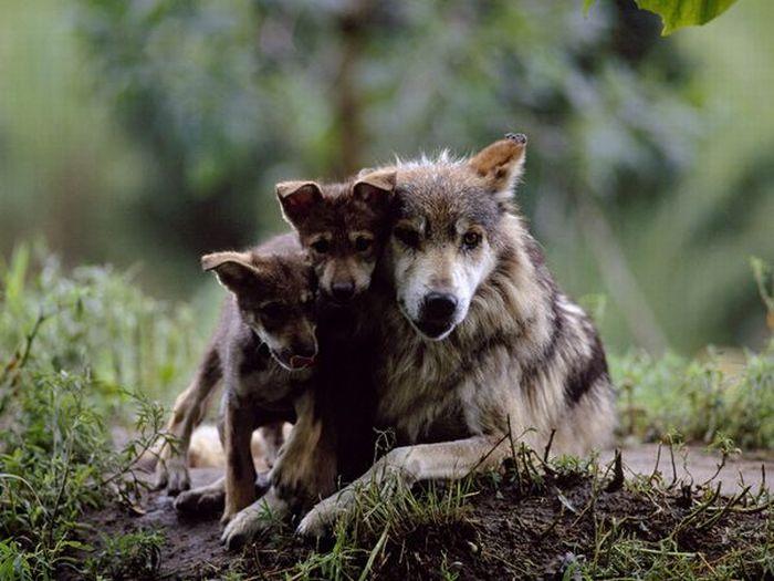 Animal Mothers And Babies (14 pics)