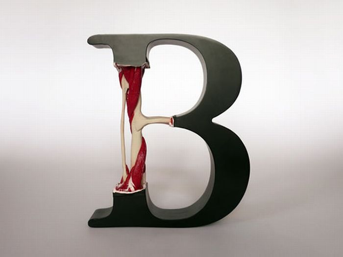 Anatomy of Letters (25 pics)