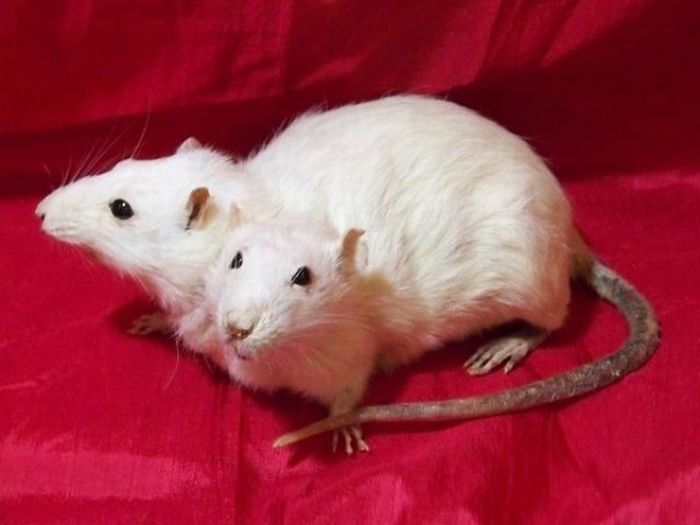 Animals with Two Heads (17 pics)