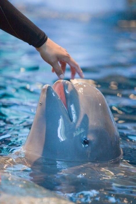 Baby Beluga (6 pics)