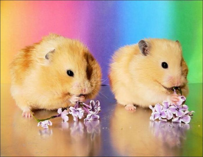 Hamsters and Flowers (16 pics)