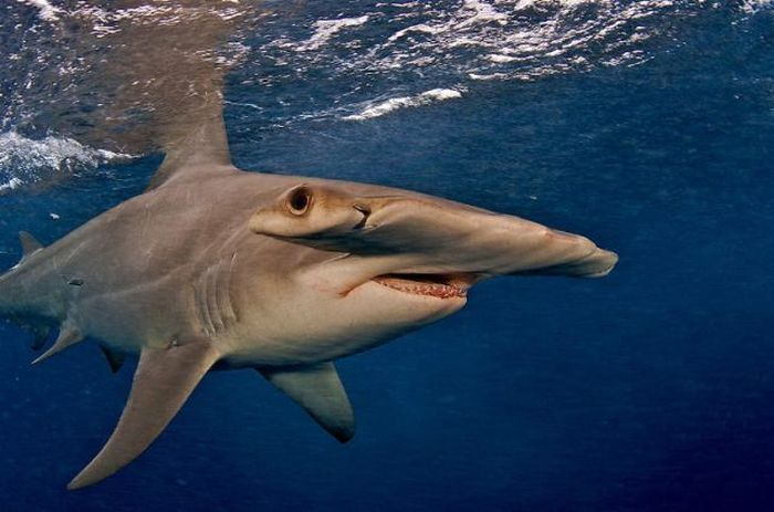 Photos of Sharks (19 pics)