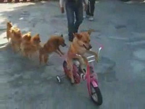 Awesome Dogs