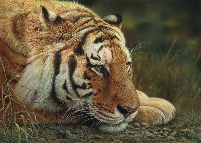 Stunning Wildlife Paintings by Denis Mayer Jr. (13 pics)