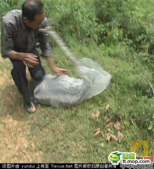 Snake Catcher vs Snake (7 pics)
