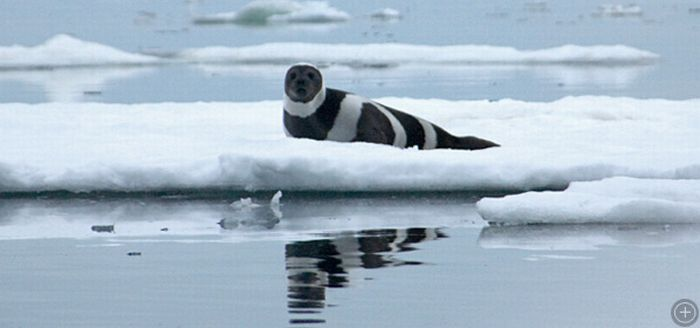 Ribbon Seals (6 pics)