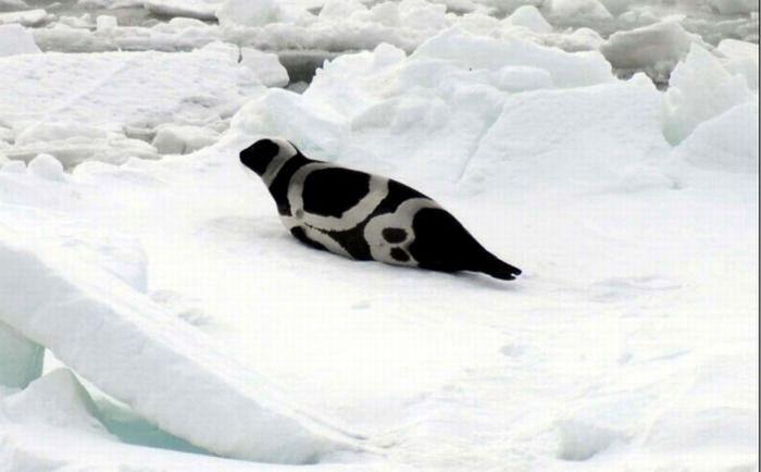 Ribbon Seals (6 pics)