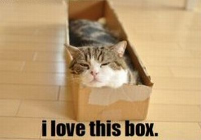 Cat & Box (6 pics)