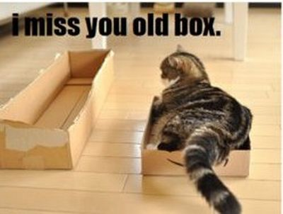 Cat & Box (6 pics)