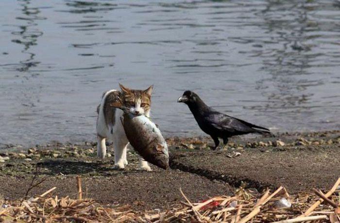 This Fish is Mine! (5 pics)