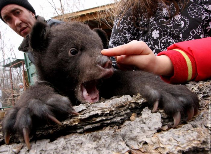 Himalayan Bear Cubs Found New Home (8 pics)