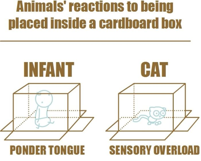 Reactions to Being Placed Inside a Cardboard Box (3 pics)