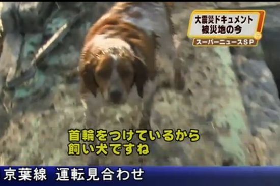 Japanese Dog Refuses to Leave Injured Friend