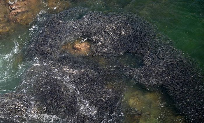 Large Swarms of Fish along the Coast of Acapulco (6 pics)