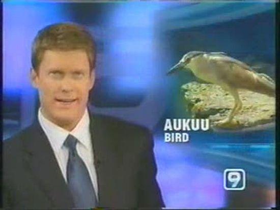 Bird Goes Fishing