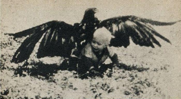 Eagle Steals Baby. Fake? (3 pics)